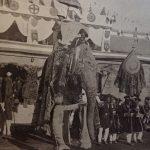 Hiragaz l'Elefante Reale